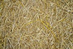 Palha amarela na terra Imagens de Stock