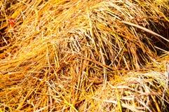 Palha amarela seca Fotografia de Stock Royalty Free