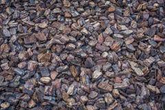 Palha de canteiro da casca de árvore Imagem de Stock