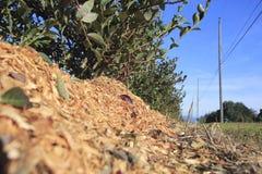 Palha de canteiro da colheita do inverno Fotografia de Stock