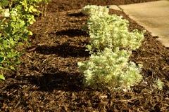 Palha de canteiro fresca em um jardim Imagens de Stock