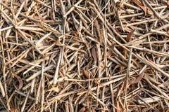 palha do arroz Imagem de Stock