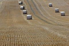 Palha em um grainfield Fotos de Stock Royalty Free