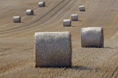 Palha em um grainfield Imagens de Stock Royalty Free