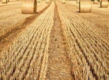 A palha pressionou em uns pacotes redondos em um campo de milho no outono imagens de stock