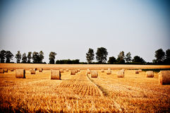 A palha rola no campo do fazendeiro do verão fotos de stock royalty free