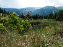 Palhas e plantas e montanhas douradas na parte traseira Foto de Stock Royalty Free