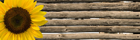 Pali del recinto e del girasole Fotografie Stock