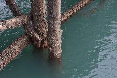 Pali di legno coperti in ostriche Immagine Stock