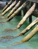 Pali di legno del pilastro in acqua Fotografia Stock