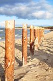 Pali di legno sulla spiaggia Fotografia Stock
