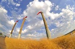 Pali fra erba gialla catturata dal fish-eye Fotografia Stock Libera da Diritti