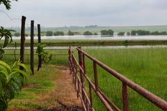 Pali nel campo con la panoramica dell'acqua Immagine Stock Libera da Diritti