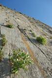 Paligremnos岩石在克利特希腊用雀跃种植槟榔属s 库存图片