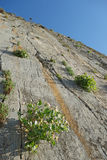 Paligremnos rock in Crete Greece with caper plants Capparis s. Paligremnos is a huge vertical rock in the bay of Plakias Crete, Greece. The cliff is a favorite Stock Image