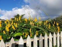 Palika ogrodzenia St Kitts obrazy stock