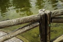Palika ogrodzenie drewno Zdjęcia Royalty Free