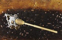Palillo amarillo y negro dulce orgánico del panal y de la miel Fotografía de archivo