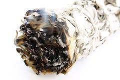 Palillo ceremonial de la mancha del sabio blanco que arde Fotos de archivo