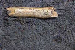 Palillo comido termita montado rastro del ajenjo que pone en la tierra arenosa imagen de archivo libre de regalías