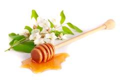 Palillo de la miel con la miel y las flores que fluyen del acacia aisladas en el fondo blanco Foto de archivo