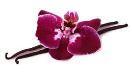 Palillo de la vainilla con la flor de la orquídea. Foto de archivo