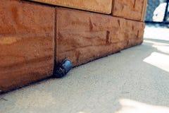 Palillo del escarabajo en arcilla de ladrillo Imagen de archivo