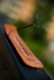 Palillo del incienso Fotografía de archivo libre de regalías