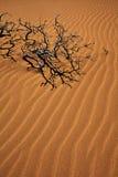 Palillo del nooky de Wavey Imagen de archivo libre de regalías