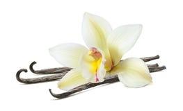 Palillo hermoso de la flor de la vainilla aislado en blanco fotografía de archivo