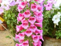 Palillo rosado de las flores fotografía de archivo