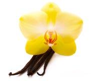 Palillos de la vainilla con la flor Fotografía de archivo