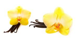 Palillos de la vainilla con la flor Imagen de archivo