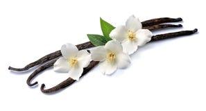 Palillos de la vainilla con las flores Foto de archivo libre de regalías