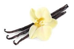 Palillos de la vainilla con una flor. Imagen de archivo