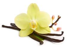 Palillos de la vainilla y orquídeas amarillas Imágenes de archivo libres de regalías