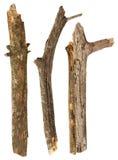 Palillos del árbol fotografía de archivo libre de regalías