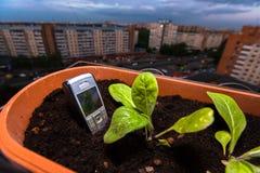 palillos del teléfono celular fuera de la tierra en la maceta en el balcón imagen de archivo libre de regalías