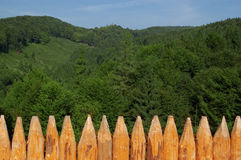 Paling. Wood paling, forest and sky Royalty Free Stock Photography