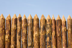 Paling close up. On a sky background Royalty Free Stock Photo