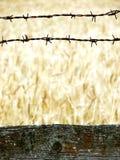 palisade нивы Стоковое Фото