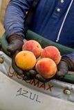 Palisade Peaches Royalty Free Stock Photo