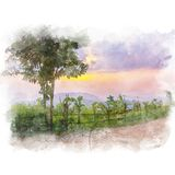 Palizada y árbol Imagen de archivo libre de regalías
