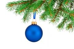 Palla blu di Natale che appende sul ramo di albero dell'abete isolato Immagini Stock