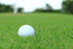 Palla da golf Immagine Stock Libera da Diritti