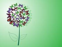 Palla del fiore del fondo verde delle farfalle Fotografie Stock