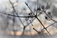 Palla di ghiaccio Immagini Stock