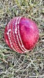 Palla di passione del cricket Fotografia Stock