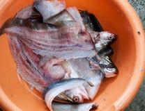 Palla di pesce fatta Immagine Stock Libera da Diritti