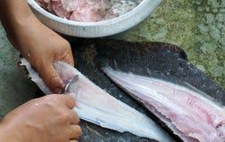 Palla di pesce fatta Fotografia Stock Libera da Diritti